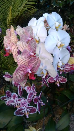 Orchid Evenings at NYBG - 2015